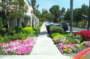 Landscape Updating, New Planting  - SoCal Landscape Contracting, Inc.